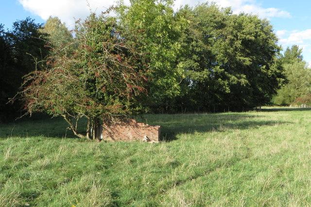 Hawthorn in a brick box