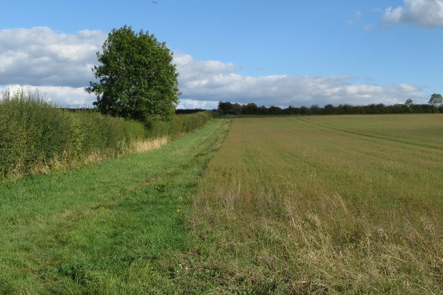 Hedge looking towards the airfield