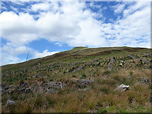 SH7007 : Looking up to Mynydd Cedris by John Lucas