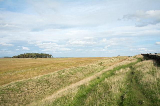 Path alongside ditch