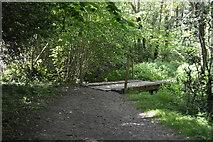 TQ6241 : Footbridge, Forest Wood by N Chadwick