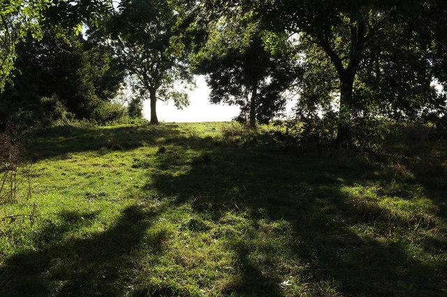 Trees near Watcombe