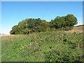 TL6554 : Sparrows Grove by Keith Edkins