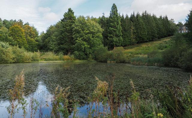 Octagon Pond at Gibside