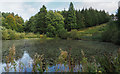 NZ1858 : Octagon Pond at Gibside by Trevor Littlewood