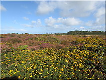 SW6433 : Purple & Yellow flowers brighten up a September morning by Matthew Hatton