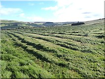 NY7346 : Windrows below Alston Moor by Oliver Dixon