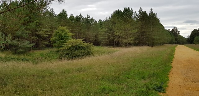 Old Clay Pit in The King's Forest