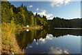 NN9159 : East Shore of Loch Faskally, Perthshire, Scotland by Andrew Tryon