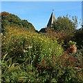 TQ4206 : Garden at Monk's House : Week 40