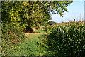 SU2623 : Path along edge of sweetcorn field by David Martin