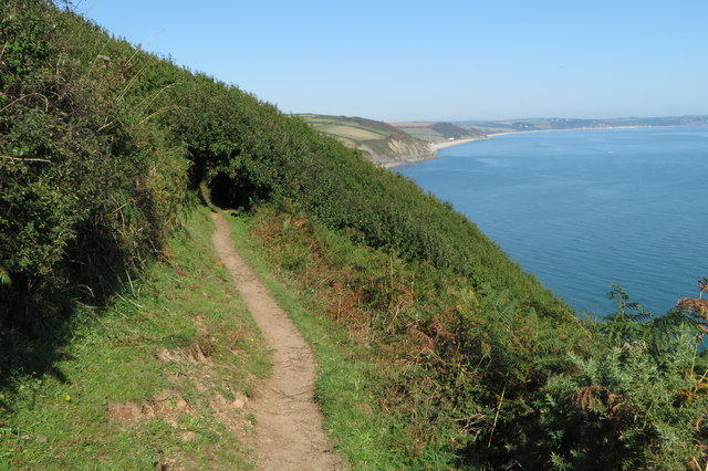 Hillside orchard on the South West Coast Path