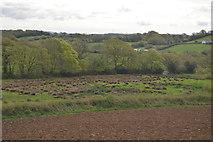 SX5857 : Rough grasses by Ridgecot Lake by N Chadwick