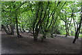TQ3991 : Epping Forest by N Chadwick