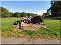 SJ8189 : Tree stump in Wythenshawe Park by Gerald England