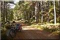 NO4493 : Road in Glen Tanar by Richard Webb