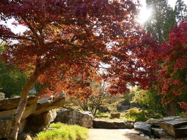 Autumn colour in Chatsworth Gardens by Graham Hogg