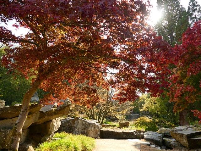 Autumn colour in Chatsworth Gardens