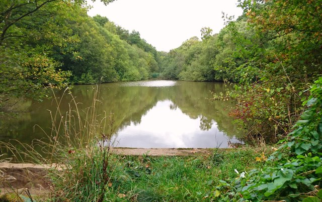 Lake in Alice Holt Forest