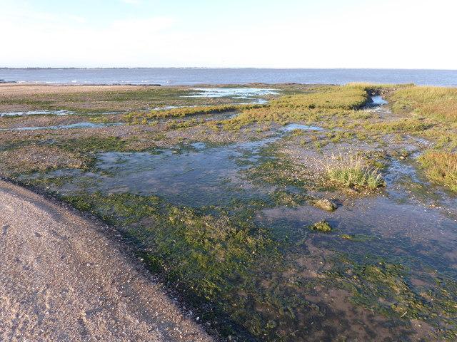 The salt marsh at Tip Head seen from the beach