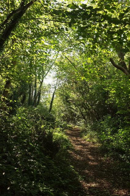 Path in Hoyle Copse