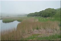 SX6741 : Reeds, South Milton Ley by N Chadwick