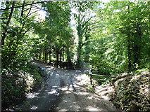 SY3699 : Ford on Stonebarrow Lane by Roger Cornfoot