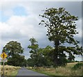 N9764 : Danestown by N Chadwick