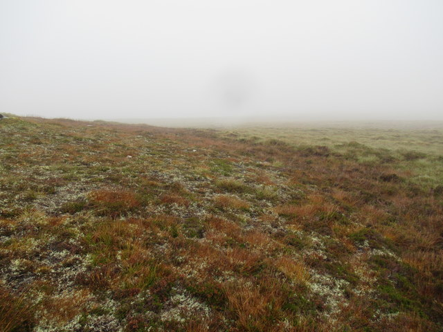 Vegetation changing from tussocks to short heather on gravelly ground at foot of Glun Liath in Alladale Forest