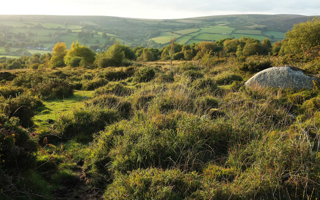 Moorland near Dipleigh