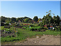 TL4856 : Cherry Hinton: Blacklands allotments, Daws Lane by John Sutton