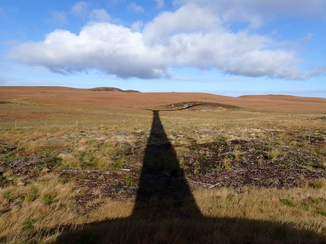 Edge of Strathy North Forest in Shadow of Wind Turbine