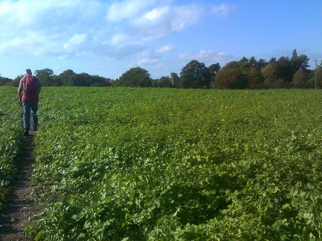 Field Path View
