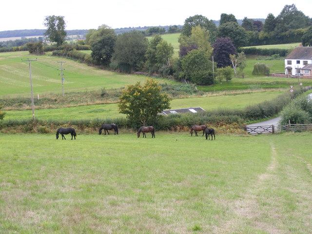 Trysull Horses
