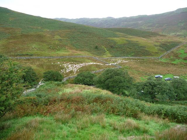 Sheep passing through a gateway into farmland, near Dale Head