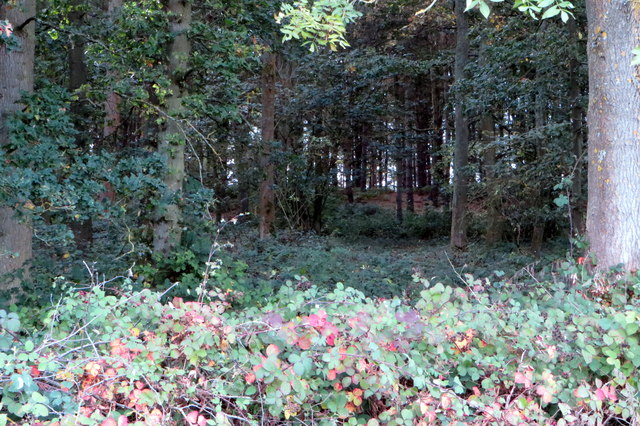 The woods on Waydale Hill