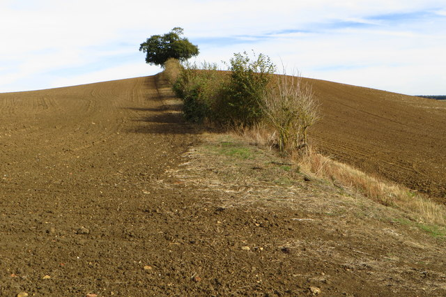 Hedge on a hillock