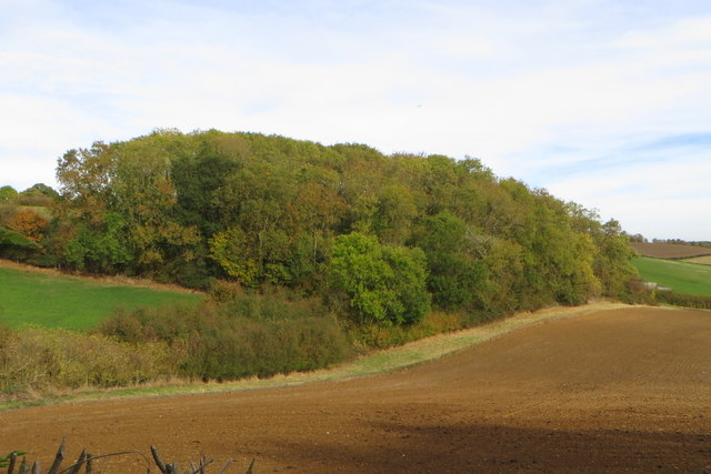 Woodland by Hillcrest Cottage