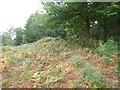 SX7689 : Bracken on the earthwork of Wooston Castle by David Smith