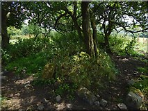 NS3878 : Rubble of Nether Dalquhurn by Lairich Rig