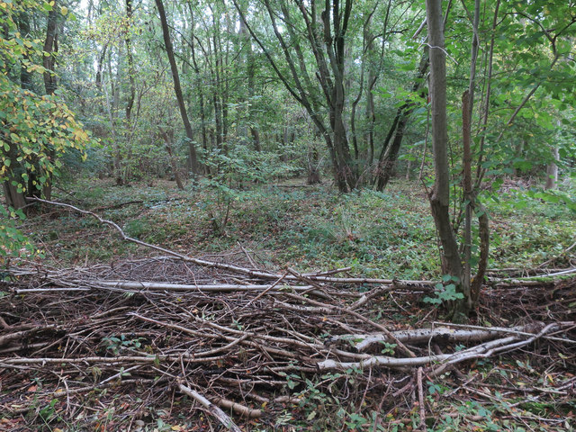 Coppicing in Waresley Wood