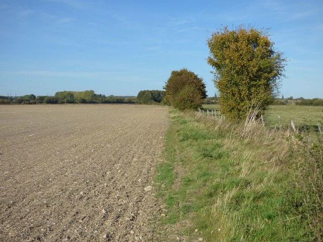 Farmland, Long Wittenham