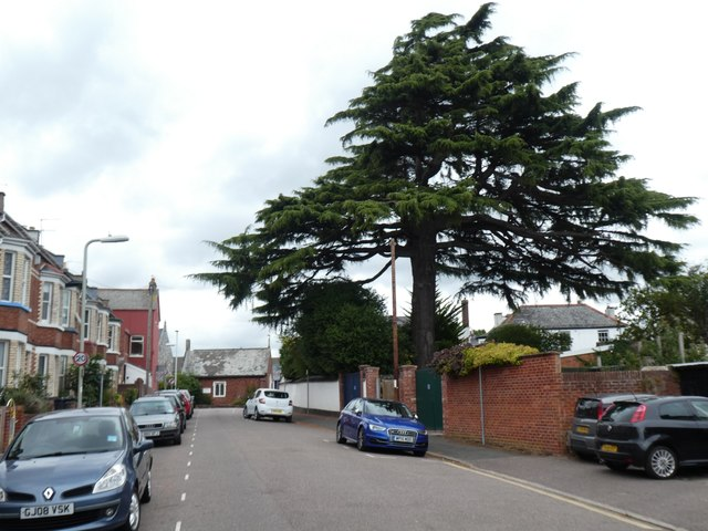 Cedar tree, Church Terrace, Heavitree, Exeter