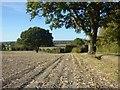 SU5592 : Farmland, Long Wittenham : Week 40