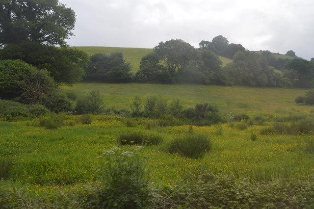 Meadow by Ayleston Brook