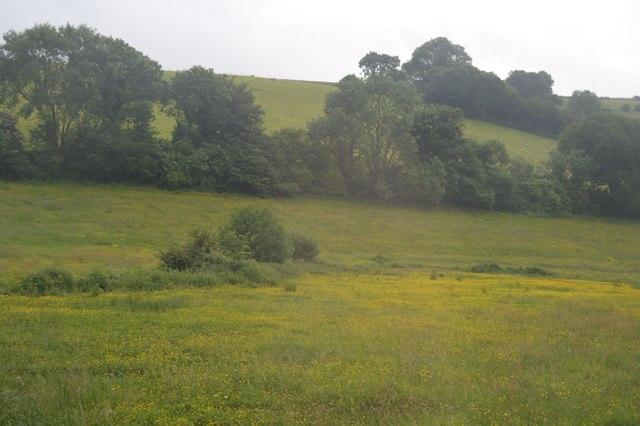 Buttercup meadow, Ayleston Brook