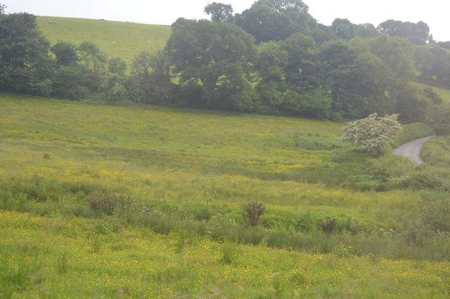 Grasslands by Ayleston Brook