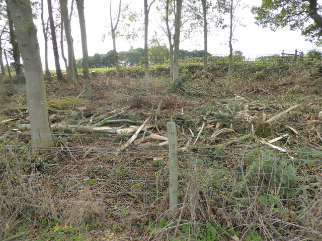 Strip of woodland cleared of brash