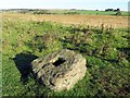 NY8594 : Medieval cross base near Brownrigg by Andrew Curtis