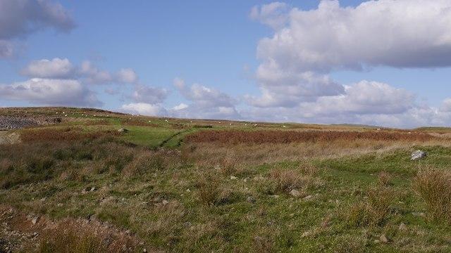 Craigmuie Moor
